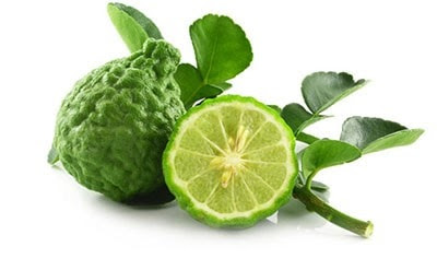 The oil of bergamot is obtained by cold pressing of the bark of the bergamot's fruit reminiscent to oranges.