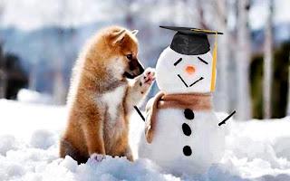 Zimske radosti pasa - Panvet blog