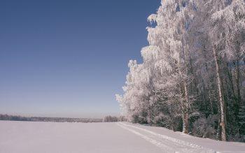 Wallpaper: The Winter beauty