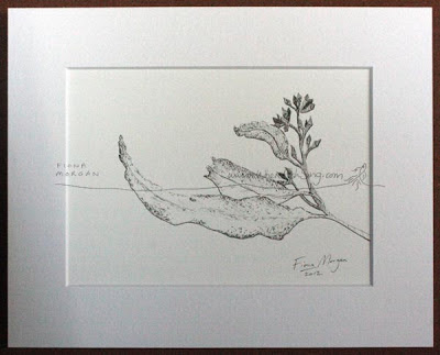 Nature study meditation drawing by Australian artist Fiona Morgan