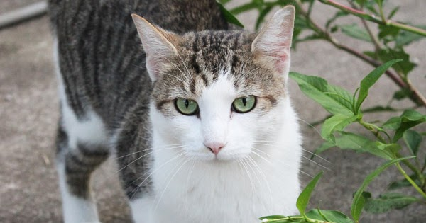 Do Neutered Cats Need Special Food