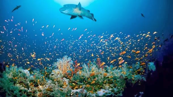 6 απίστευτα πράγματα για τους ωκεανούς