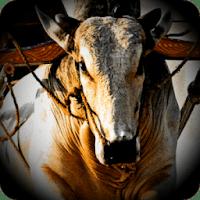 Hewan Ternak Sapi Balap 3D APK v1.2 Mod Unlimited Money Terbaru