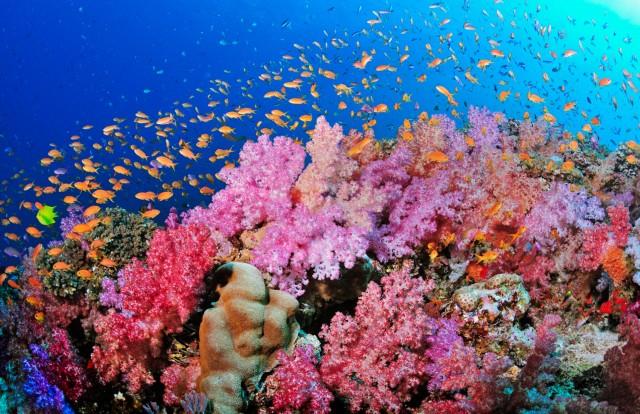 sharm-el-sheikh-snorkeling-poracci-in-viaggio