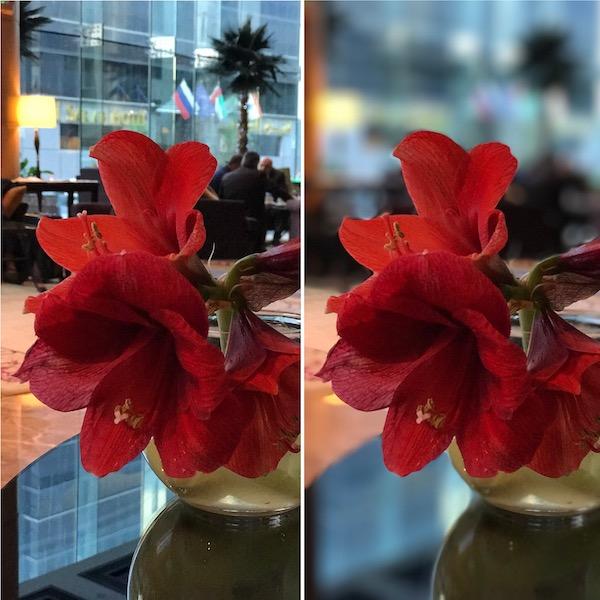Ảnh chụp bởi iPhone 7 Plus trước và sau khi dùng chế độ chụp chân dung