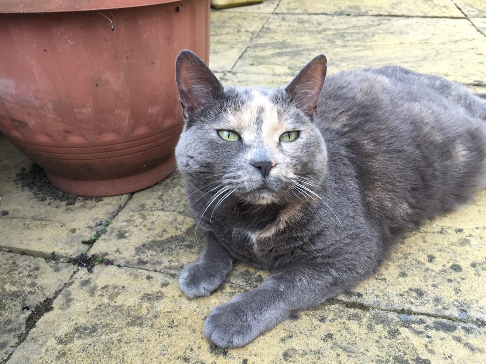 virtual lancaster news blog hill s pet nutrition cat food