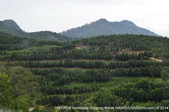 Gaharu Tea Farm - Homestay Gopeng, Perak