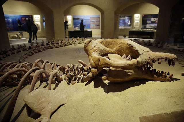 Egypt Opens Middle East's First Fossil Museum