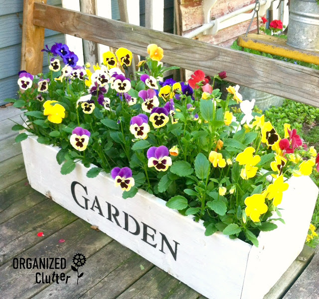 Pansies Planted in a Toolbox organizedclutter.net