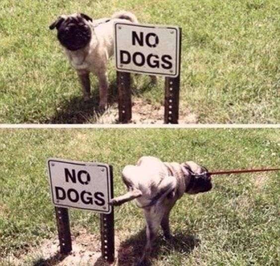 Funny No Dogs Sign Disrespect Picture