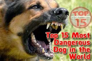 Top 15 Most Dangerous ...