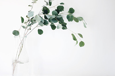 A sprig of eucalyptus in a vase