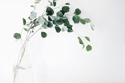 A sprig of eucalyptus in a vase