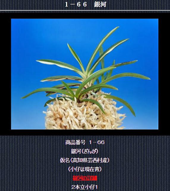 http://www.fuuran.jp/1-66.html