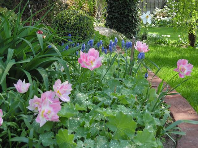 tulipany i wiosenne cebule