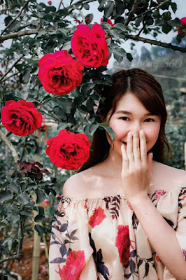 hoa hồng cổ sơn la