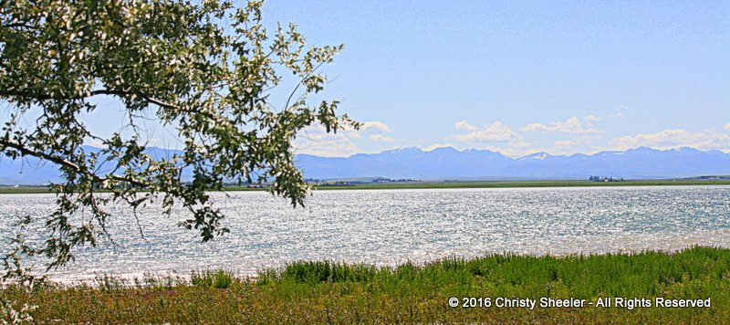 A windy day on the lake, the mountains in the distance.  Tall grasses stand in the foreground.