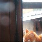 http://www.patypeando.com/2017/04/proyecto-fotografico-foto-de-gato.html