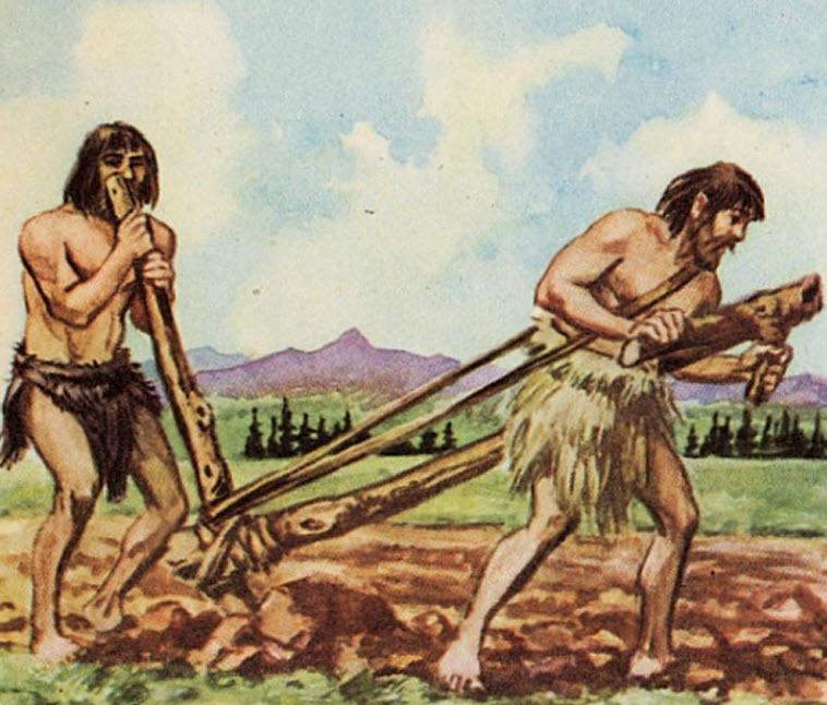 Celibamy agricultor