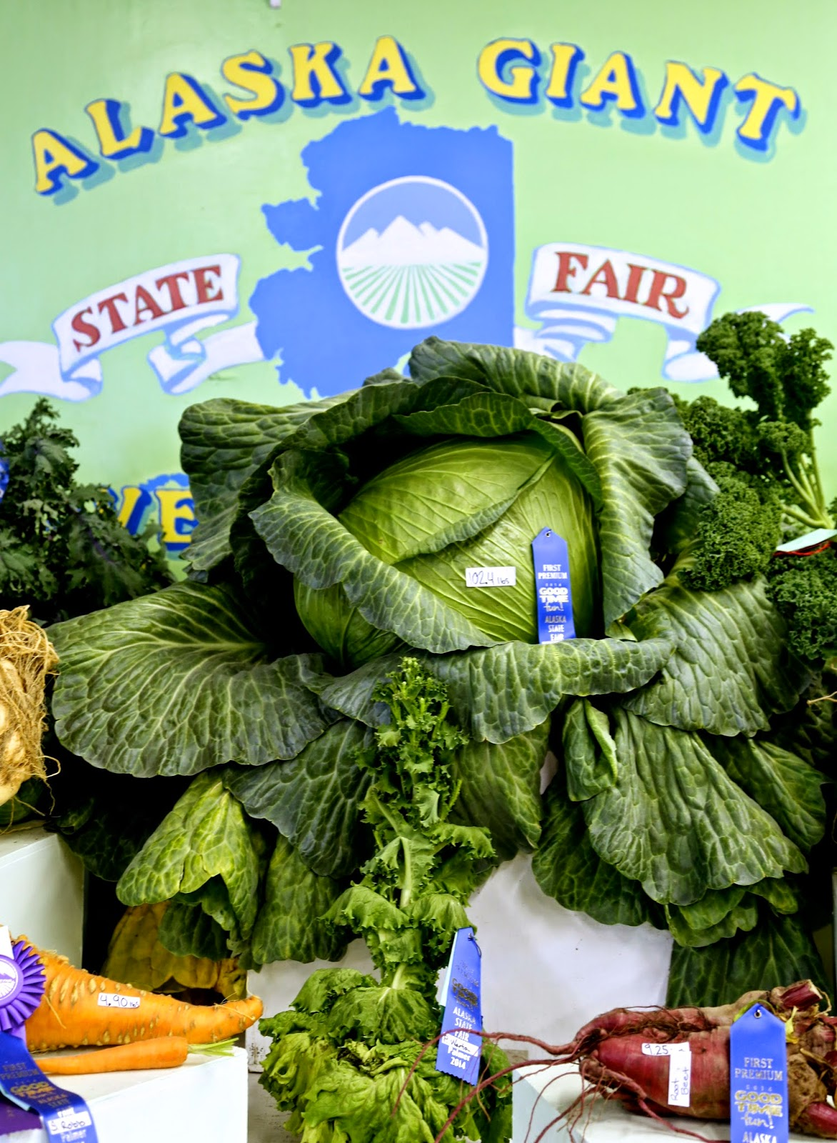 Giant Alaskan vegetables such as a 100 pound cabbage