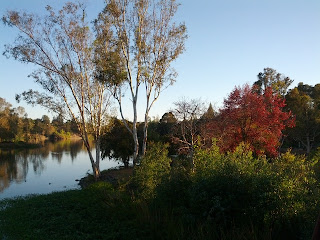 Trees with red and yellow leaves along the shore of Vasona Lake.