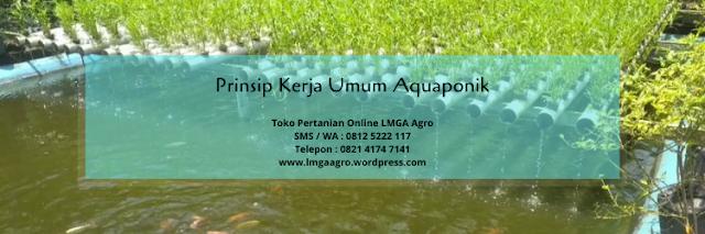 aquaponik, ikan, budidaya tanaman, pertanian, lmga agro
