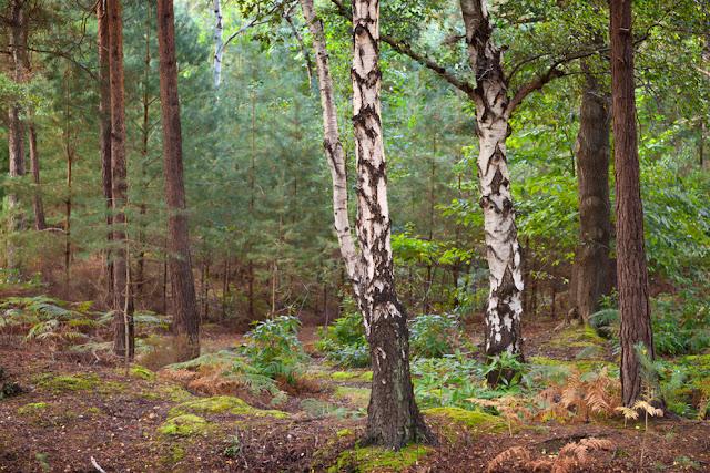 Brownsea Island woods off the Poole coast in Dorset