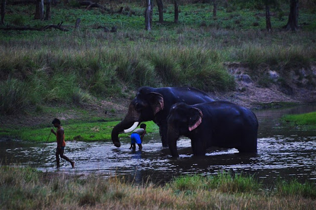 elephants safari Bandhavgarh National Park and Tiger Reserve