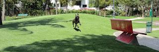 materials used in the production of fake grass are safe enough for dogs, yet strong enough to dogs artificial grassdogs of different sizes, age and breeds can do.