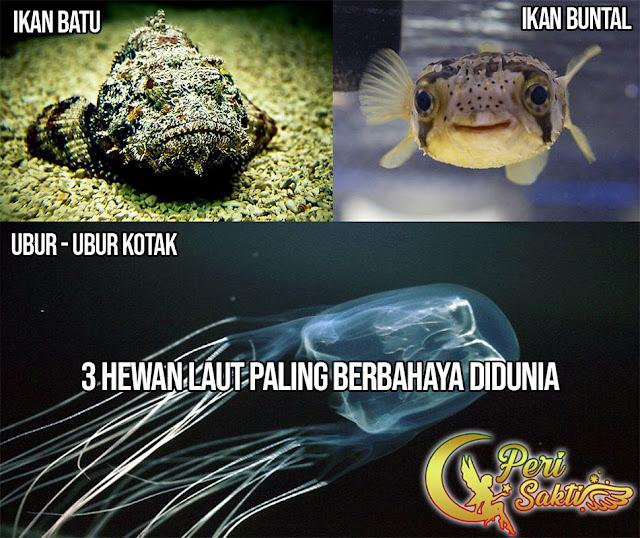 3 Hewan Laut Paling Berbahaya Didunia