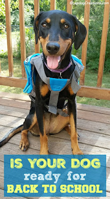 doberman mix puppy wearing backpack