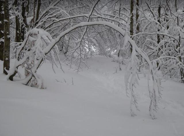 bosco innevato lungo il sentiero 198 a Rocca d'Aveto