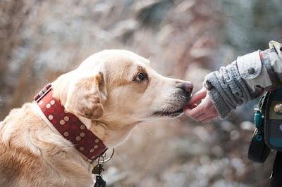 Πρώτες βοήθειες σε ζώα με δηλητηρίαση