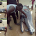 Baby Whale Butchered in Delta State