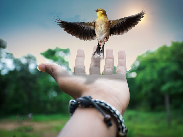 A bird coming out of the hands of a people creative art product of the imagination of an artist