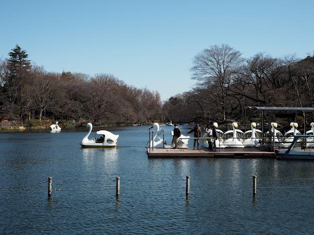 Swan boats for hire oin Inokashira park
