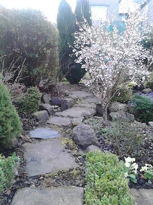 Spring blossom Prunus Kojo-no-mai Green Fingered Blog