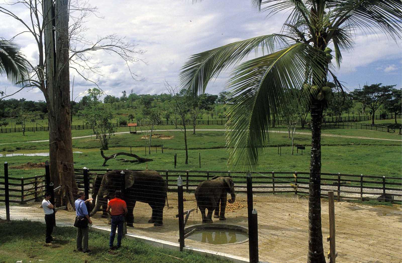 Los elefantes de la hacienda.