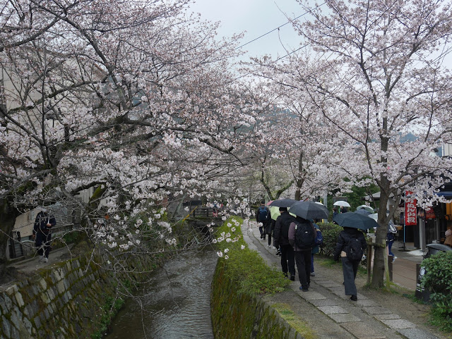 Philosopher's path in Kyoto, japan lined with sakura cherry blossom trees
