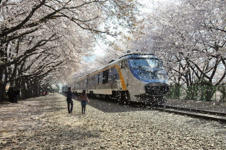 2. Changwon City, South Korea - Top 10 Blooming Cities in Spring