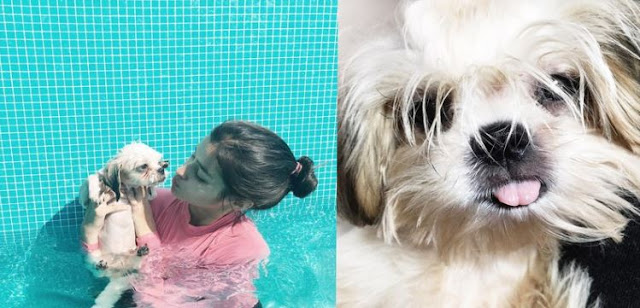 MUST SEE: Cutest Photos Of Celebrities With Their Furry Friends! #16 Is Indeed The Cutest!