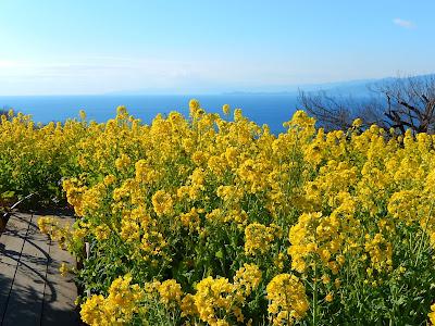 吾妻山公園からの相模湾