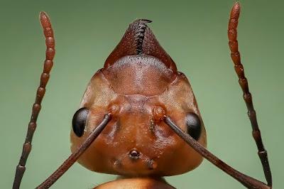 चीटियाँ लाइन में क्यों चलती हैं? | Facts about Ant in Hindi