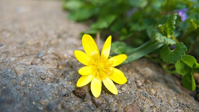 Flori de primavara in gradina Botanica
