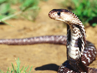 top 26 most wonderful snake wallpapers in hd