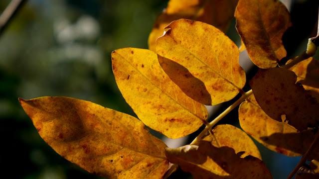 Foglie colorate in autunno. Fotografia di Giovanni Battisti