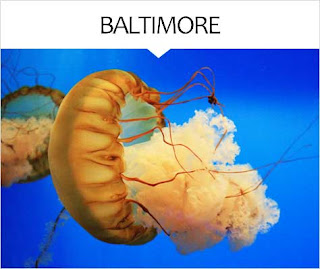 My Travel Background : City Guide Baltimore