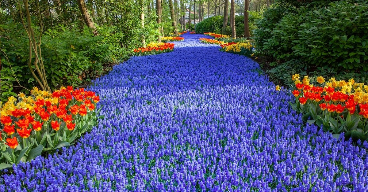 The Spectacular 'Flower Stream' Garden In Holland Bursts With Seven Million Colorful Blooms