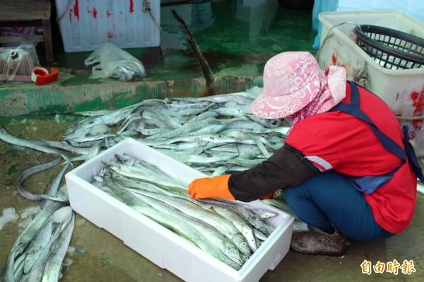 """漁汛期到來,除了白帶魚大豐收之外,漁民竟捕獲""""這個"""",讓圍觀民眾大開眼界!"""