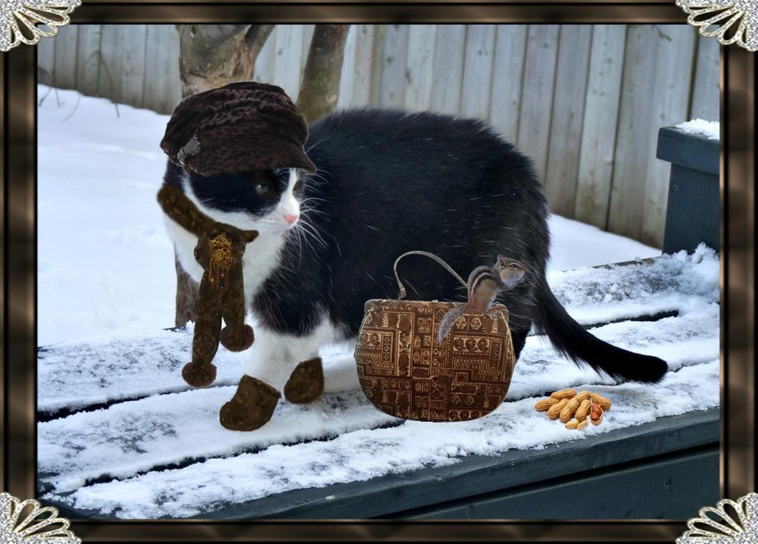 breeze cat box